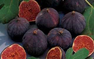 Інжир — сорт Кримський чорний, особливості вирощування, характеристики, відео