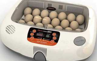 Інкубатори для курячих яєць автоматичні — ціна, виготовлення інкубаторів з автоматичним поворотом яєць своїми руками, відео