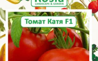 Томат Катя F1: характеристика і опис сорту, рекомендації по вирощуванню