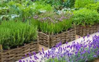 Бордюри і огорожі для городу з цілющих трав. Список пряних трав з назвами і фото