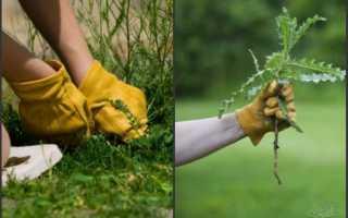 Гербіциди від бур'янів [вибір за типом дії і по рослинах]