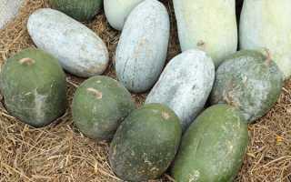 Бенінказа Бенінказа — особливості, вирощування, догляд, відео