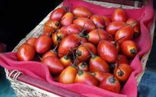 Як є тамарілло, опис і особливості фрукта, відео