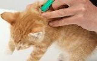 Краплі від бліх для котів і кошенят: принцип дії