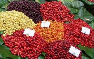 Культурні сорти кизилу для успішного вирощування на дачі, відео