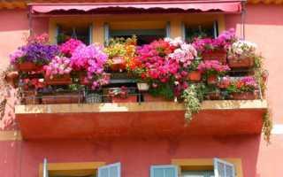 Як доглядати за петунією на балконі для пишного цвітіння, відео