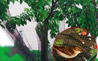 Сітка для захисту врожаю від птахів і комах, зроблена в Китаї, ціна, відео