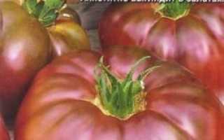 Томат Чорний барон: характеристика і опис сорту, особливості вирощування