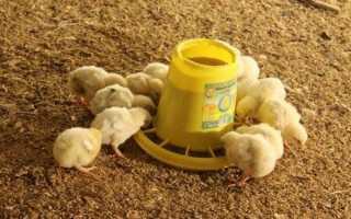 Комбікорм для курчат яєчних порід — приготування в домашніх умовах, відео