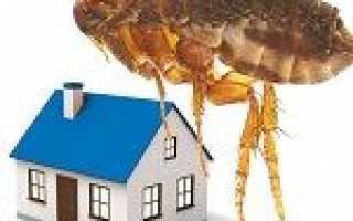 Як позбутися від бліх з будинку: основні способи