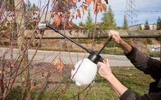 Весняна обробка саду сечовиною з мідним купоросом, терміни обприскування, відео