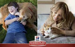 Корм Хіллс для кішок і собак — сухий, лікувальний, для цуценят і кошенят, відео