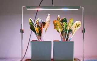 Фітолампи для рослин. Як вибрати, для чого потрібна і скільки коштує фітолампи