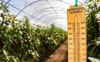 Чому помідори не червоніють в теплиці, що робити Причини Рекомендації
