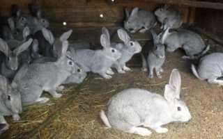 Як утримувати кроликів, види розведення в клітинах і на волі, відео