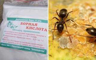 Борна кислота від мурах в городі і будинку, як труїти, відео