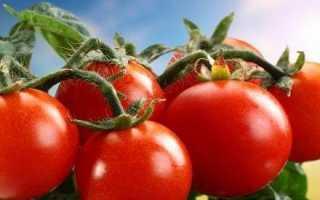 Як садити помідори? Коли садити помідори?