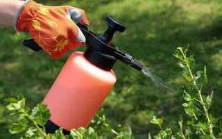 Правила обприскування саду сечовиною: навесні і восени, як приготувати розчин