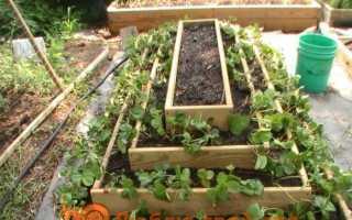 Вертикальні грядки для вирощування полуниці