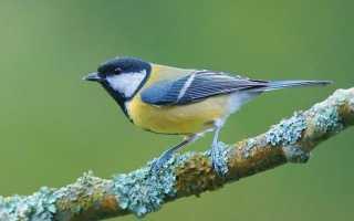 Як залучити птахів у сад. Годівниця. Шпаківню. Покормите птахів. Фото.