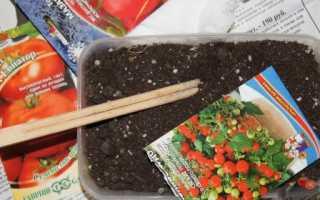 Як садити помідори на розсаду: підготовка і посів насіння, відео