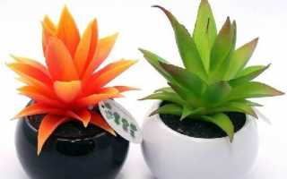 Агава рослина. Вирощування агави. Догляд за агавою