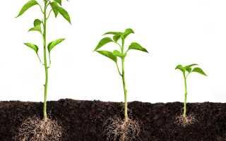 Регулятори росту рослин — класифікація, застосування, відео