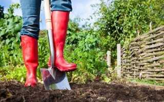 Після чого садити буряки. Що садити після буряка на наступний рік у відкритому грунті навесні і восени