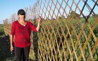 Жива огорожа з верби — вибір і посадка прутів, плетіння, обрізка, відео
