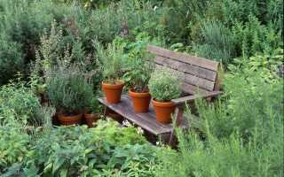7 лікарських рослин для вашого саду