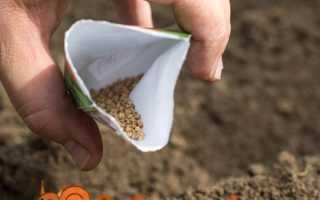Вирощування щавлю з насіння — рання зелень!