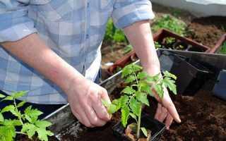 Коли можна відкривати помідори у відкритому грунті. Коли прибирати тимчасове укриття