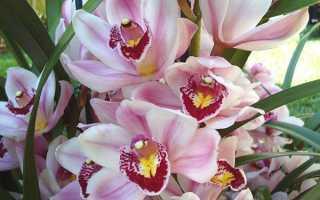 Горщики для орхідей — як вибрати, кашпо, миски, відео